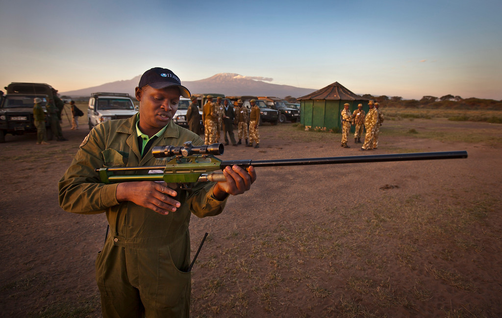 . In this Tuesday, Feb. 19, 2013 photo, Dr. Jeremiah Poghon readies his tranquilizer gun as he and a team from the Kenya Wildlife Service (KWS) and the International Fund for Animal Welfare (IFAW) prepare to fit elephants with GPS-tracking collars to monitor their migration routes and to help prevent poaching, at the Kimana Wildlife Sanctuary next to Amboseli National Park in southern Kenya, near the border with Tanzania. (AP Photo/Ben Curtis)