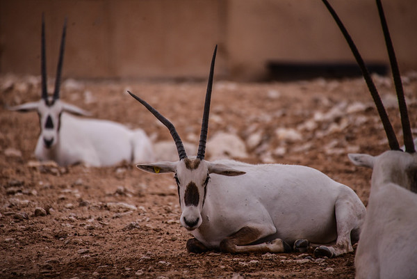 Al Ain Zoo, UAE
