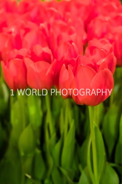 Navy Pier Chicago Flower and Garden Show-184-2-59.jpg