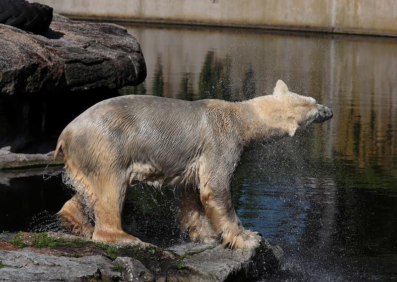 1D3L7359 zoo.jpg