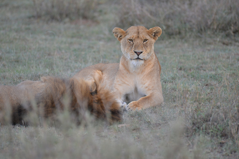 East Africa Safari 290.jpg