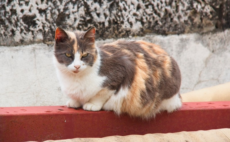 Cats of Korčula, Croatia
