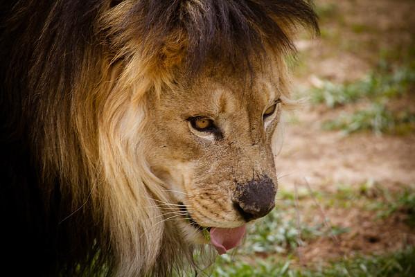 Denver Zoo 04-21-2013