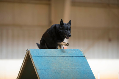 Tail Blazers AKC Agility Trial March 11-13