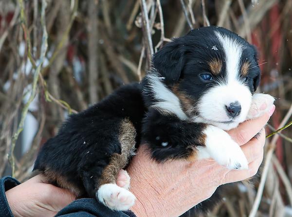 Cookie 4 weeks