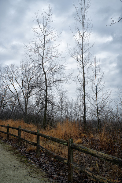 Thin Trees