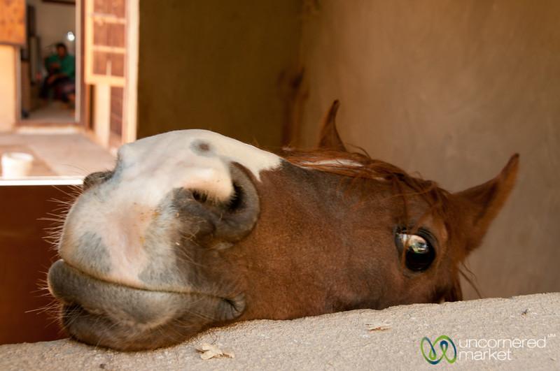 Curious Horse - Jerash, Jordan