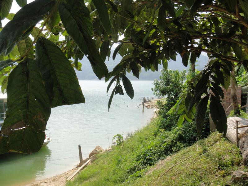 Belum Rainforest (12).JPG