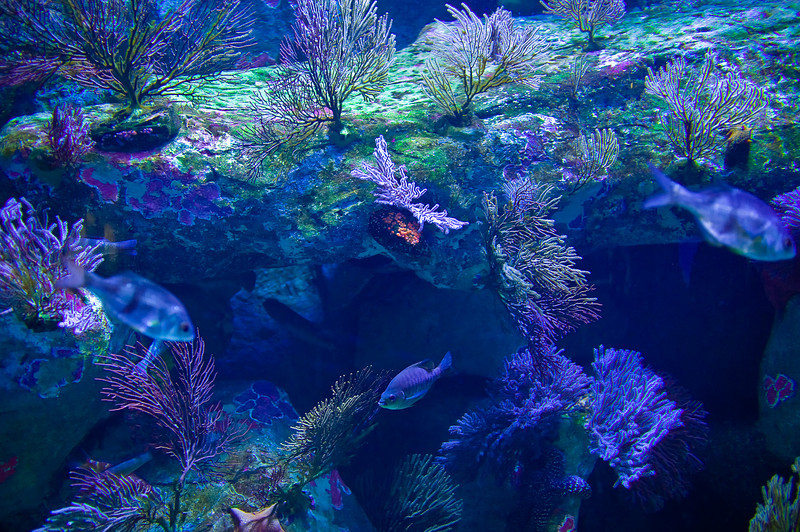 LB-Aquarium-II_08.jpg