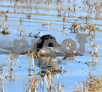 hunters-should-find-good-conditions-for-waterfowl-seasons