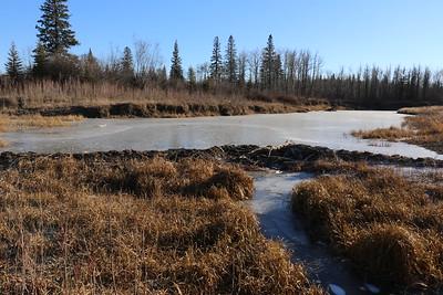Beaver Dams and wetlands