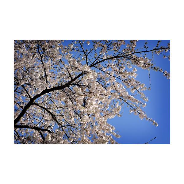 86_Blossom_10x10.jpg
