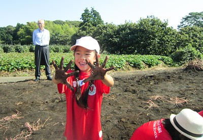 Kindergarten Service Learning - Harvesting Sweet Potatoes