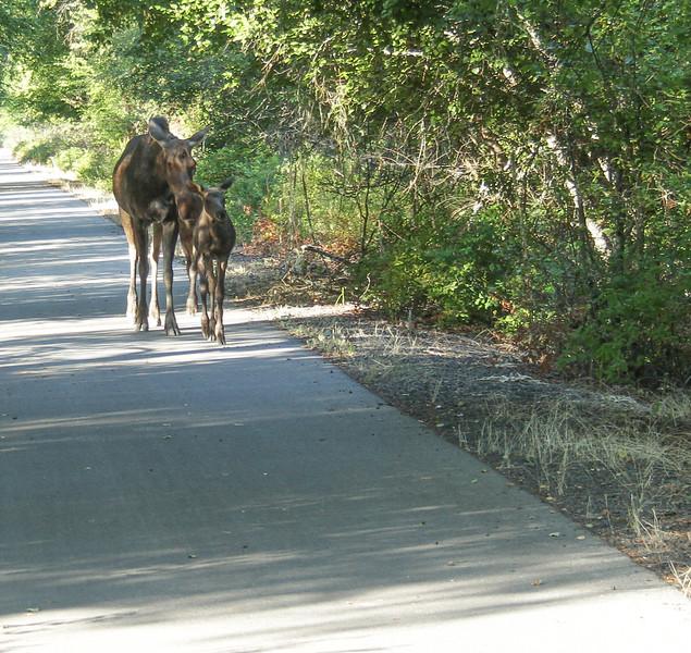 bike trail-6347.jpg