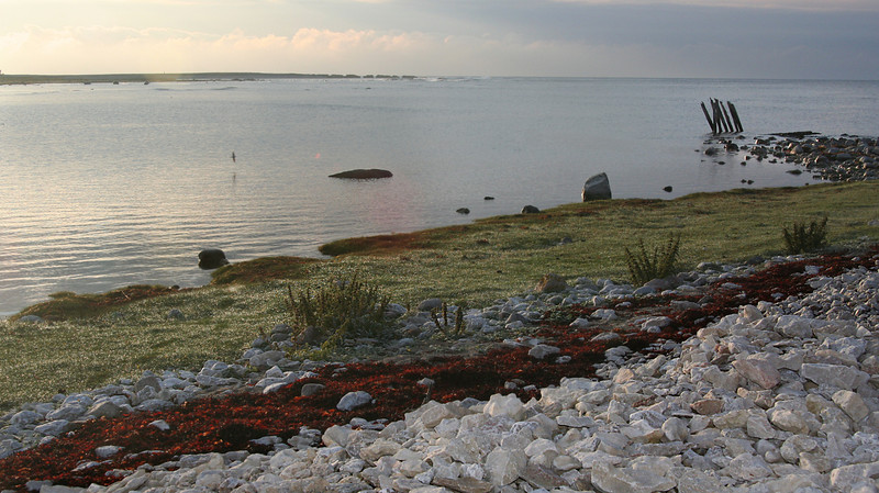 Gotland 20110608_0035.jpg