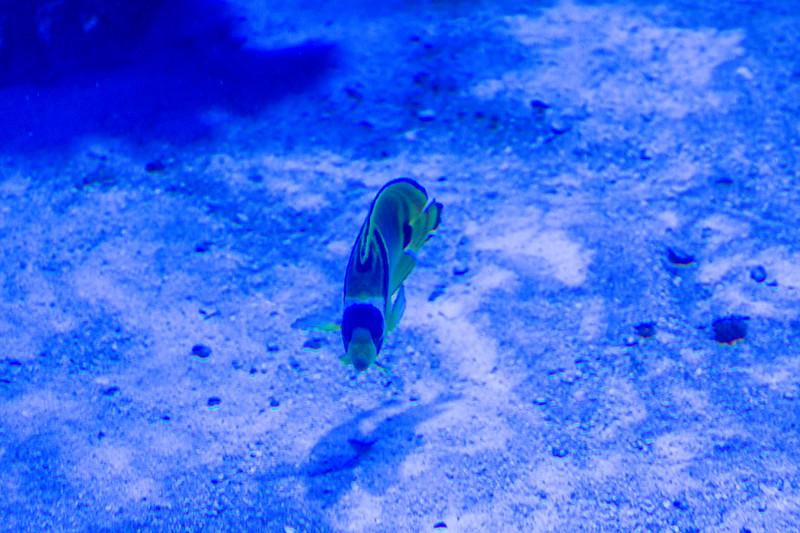 GA Aquarium with Linc, Ali & Abe-7.jpg