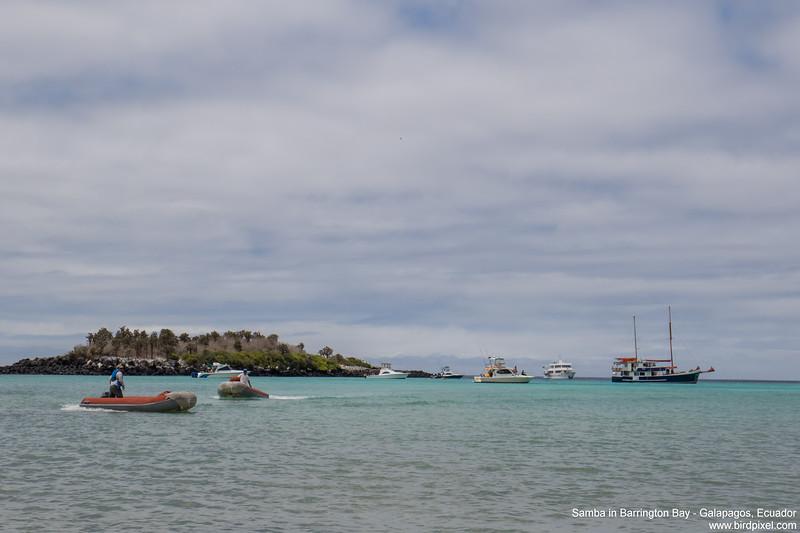 Samba in Barrington Bay - Galapagos, Ecuador