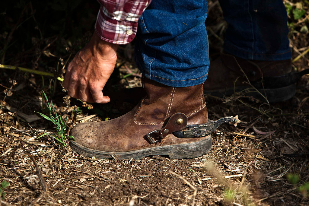 . Alon, an Israeli cowboy, fixes his boot as he tends cattle on a ranch just outside Moshav Yonatan, a collective farming community, about 2 km (1 mile) south of the ceasefire line between Israel and Syria in the Golan Heights May 2, 2013.  REUTERS/Nir Elias