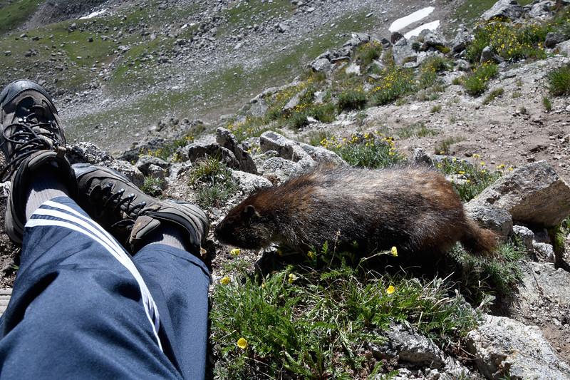 Marmot-LaPlataPeak.jpg