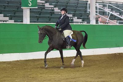 171 - Hunt Seat Equitation Stake, all ages