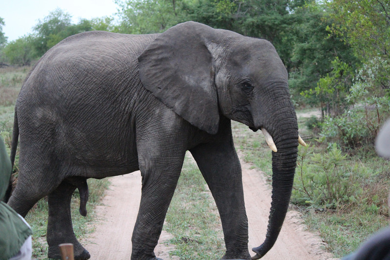Africa Trip 2012 352.jpg