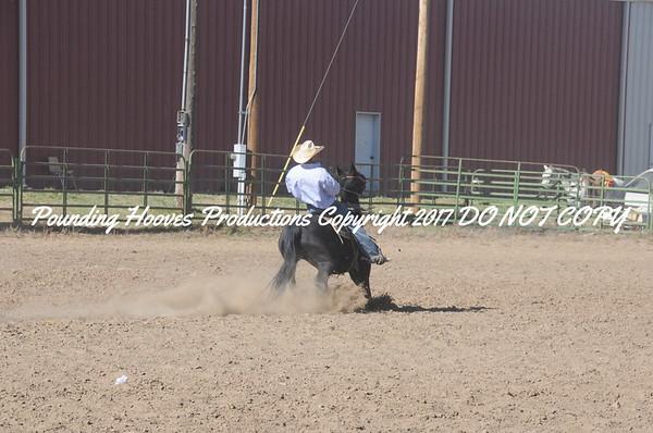 Cow Horse Comp