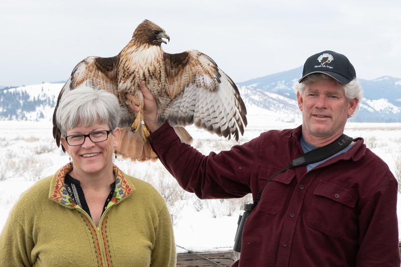 Plumas County Raptor Band & Release Team - Red-Tailed Hawk