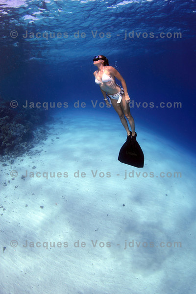 Freediving Images - Supplement