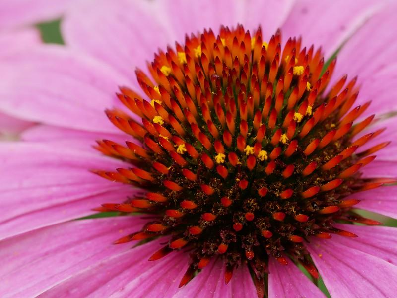 macro view of flower