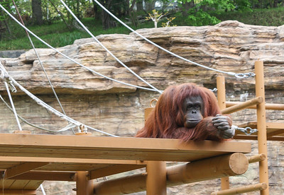 Kazu Zoo April 2012