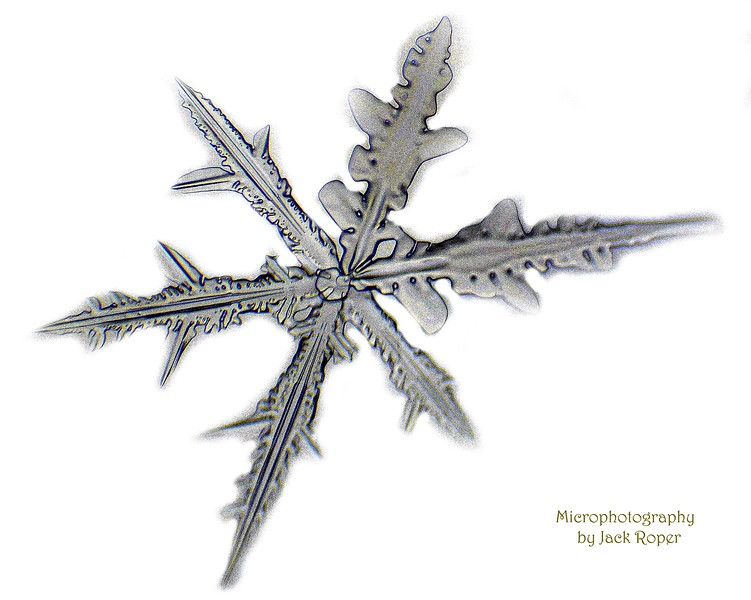 Snow flake 1590.jpg