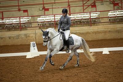 Horse 41
