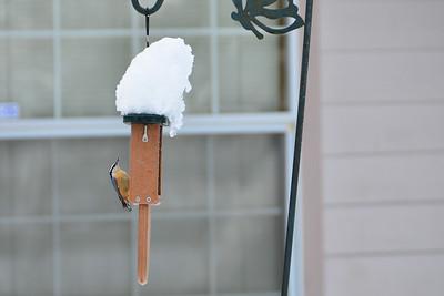 Snow - January 17, 2012