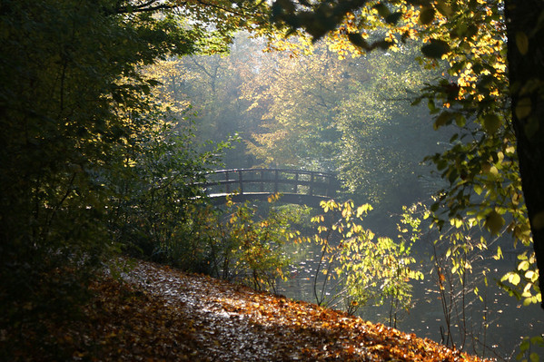 Landscape Autumn / Landschap herfst