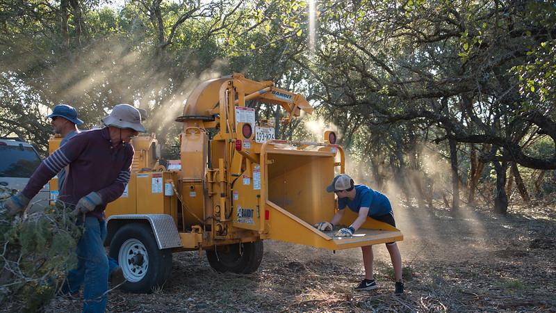 Cedar Removal Project