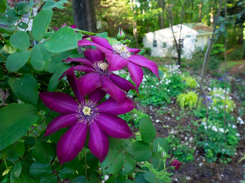 Garden_apr20-4200019.jpg