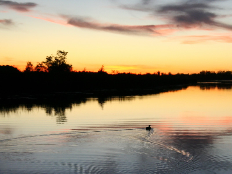 sunset_duck_02_10212007.jpg