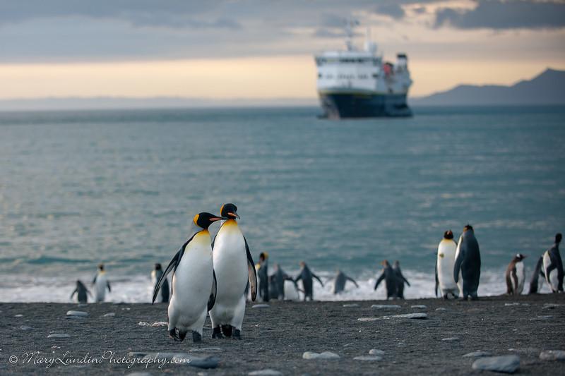 Antarctic-83
