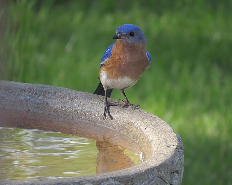 sx50_bluebird_ben_bath_198_1.jpg