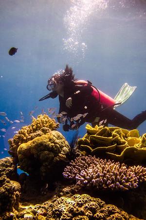 7/22: Eilat - SCUBA Diving!