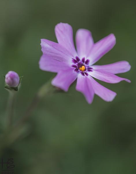 Simple purple flower