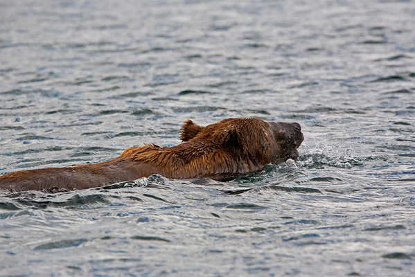 Alaska: Bering Sea, Southwest Coast & Katmai National Monument