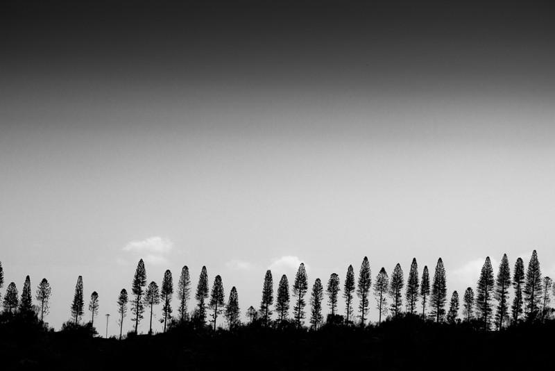 clay treeline.jpg
