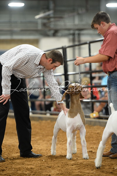 Goat Show - Class Ringshots