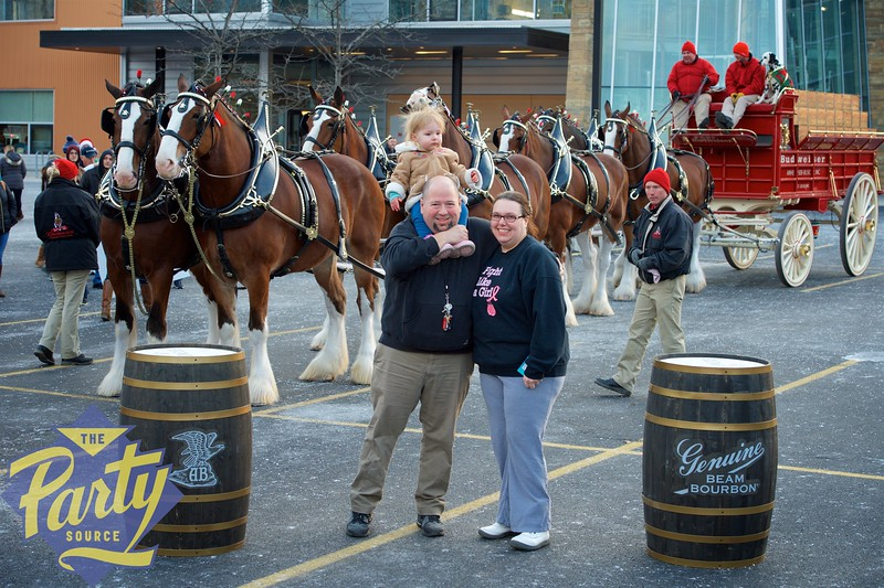 Clydesdale Portraits 204.jpg