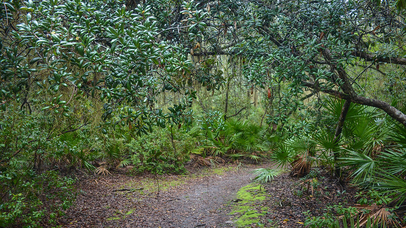 Trail corridor with oak canopy