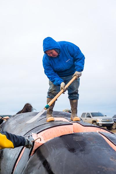 Utqiagvik Whaling-6104733-Juno Kim-nw.jpg
