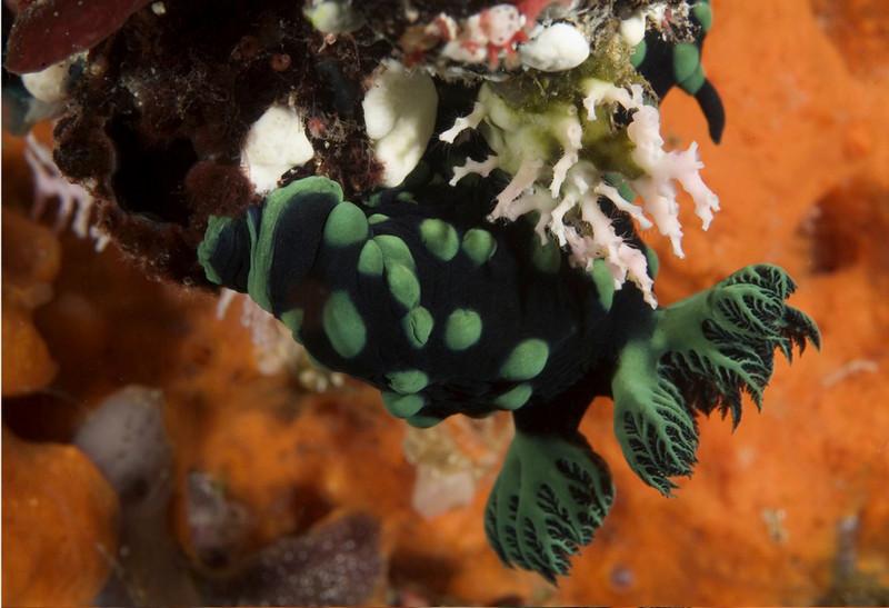 nudi green 5.jpg