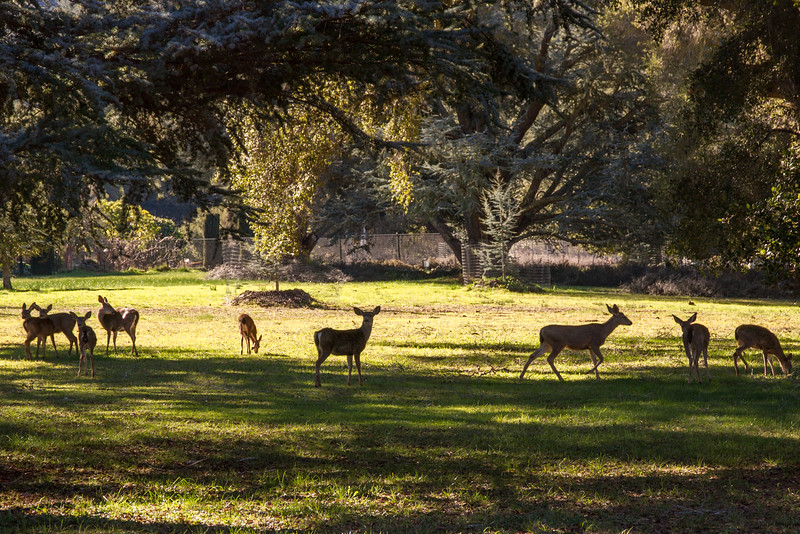 Filoli_Buddy_Hike-Jan1413-27.jpg