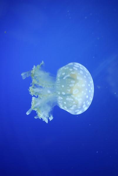 Nagoya Aquarium